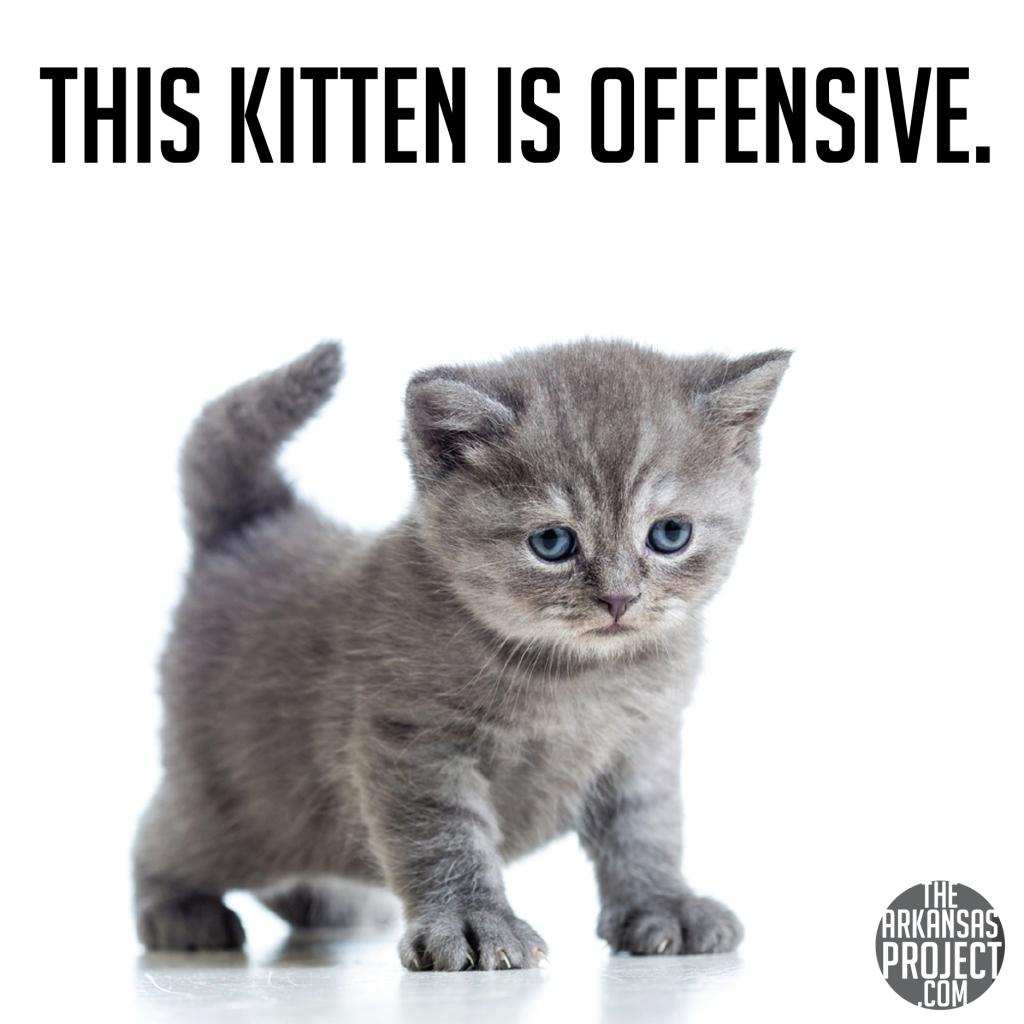 Offensive Kitten