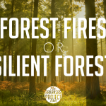 Forest Fires or Resilient Forests?