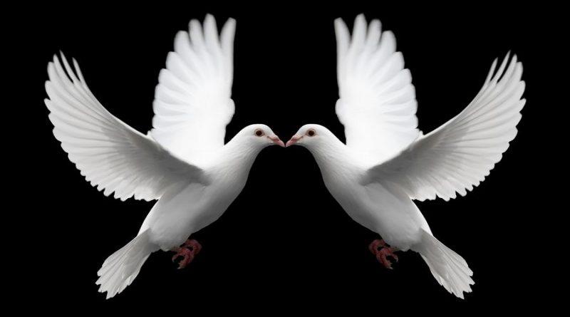 Pair_of_White_Doves_Symbolize_Love.jpg